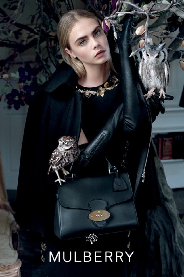 mulberry-fall1